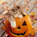 Halloween ! - Page 4 J900l610