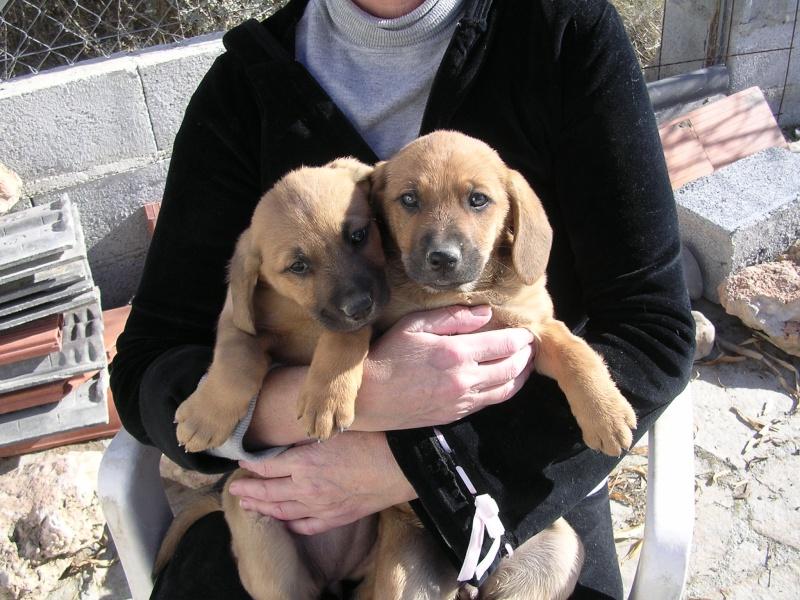 puppies needing home Dscn0512