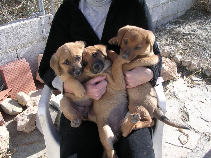 puppies needing home Dscn0514