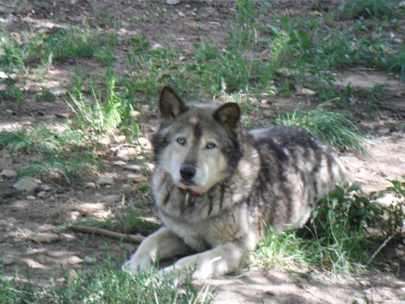 LUCKY Husky 16 ans et demi ASSO65  DECEDE - Page 2 Gros_p12