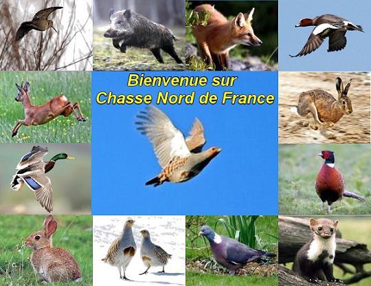 Forum Chasse Nord de France, ouvert à tous les cha - portail Bannie10