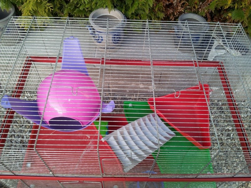 Grande Cage et Cage en Plexi 2011-112