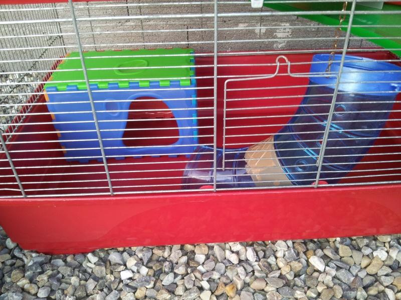 Grande Cage et Cage en Plexi 2011-113