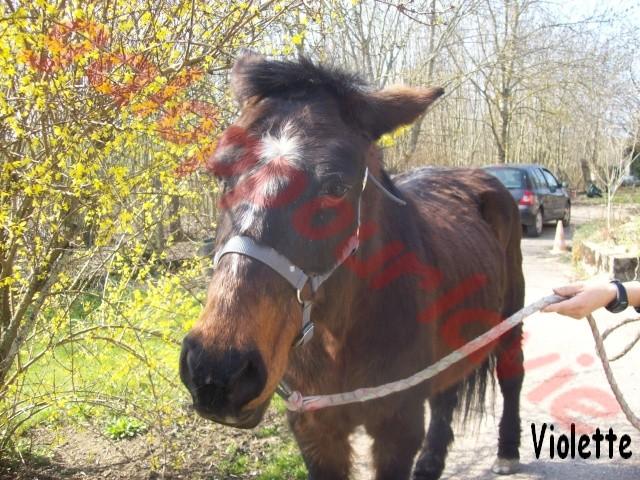 VIOLETTE - ONC née en 1990 - annonce désactivée en l'absence de nouvelles de sa propriétaire 100_0010