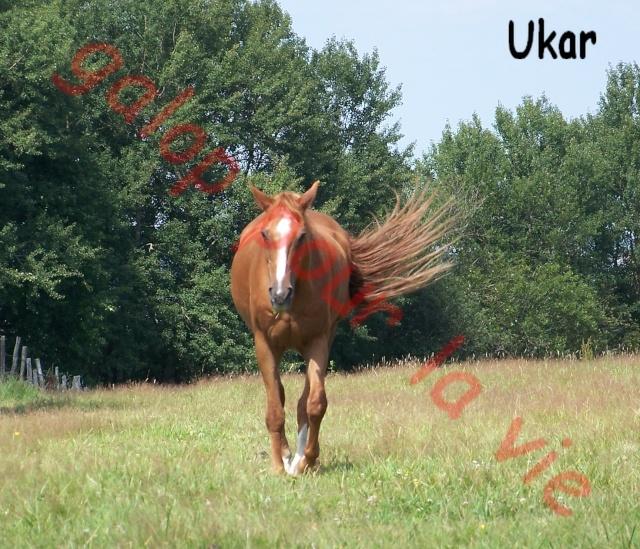 UKAR - ONC selle né en 1986 - accueilli en novembre 2011 chez Pech Petit 100_4611