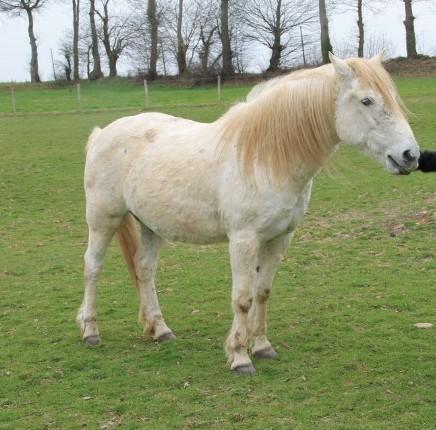 GRISOU - ONC poney né en 1994 - adopté en août 2010 - décédé pendant l'été 2017 - Page 2 11310