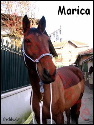 MARICA - SF née en 2001 - Adoptée en avril 2012 par Rafale 15209110