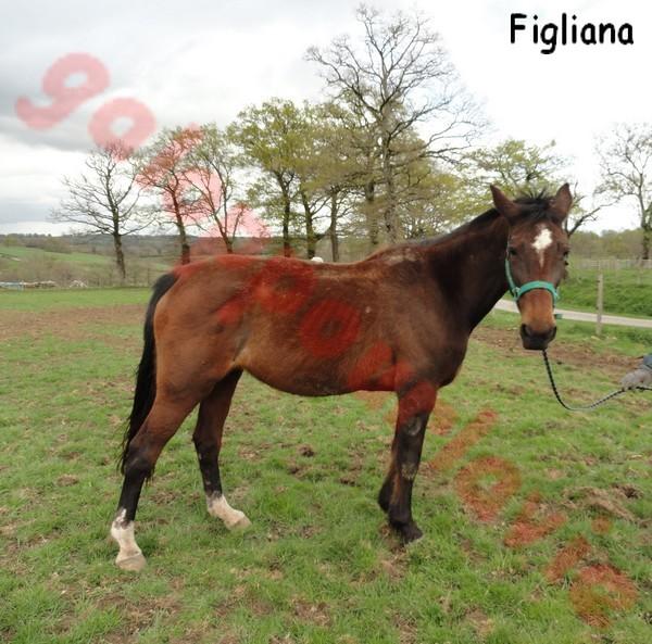 FIGLIANA - TF née en 1993 - adoptée en décembre 2013 par Chantal - Page 3 67942710