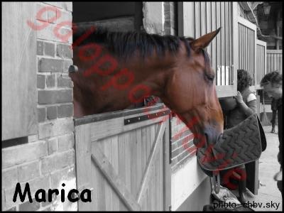 MARICA - SF née en 2001 - Adoptée en avril 2012 par Rafale 91573910