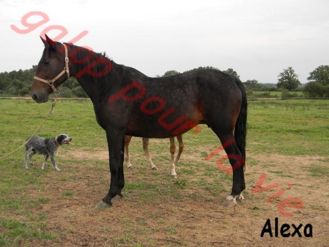 Alexa Gede jument - Placée hors association Alexa_12