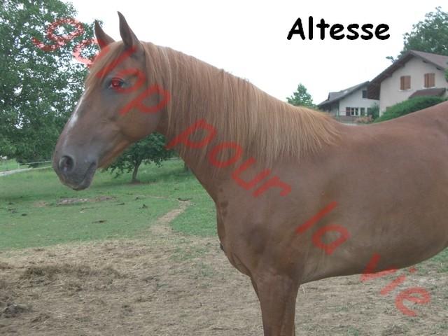ALTESSE - ONC selle typée espagnol née en 1993 - annonce désactivée en l'absence de nouvelles du propriétaire Altess11