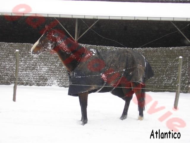 ATLANTICO - PSA né en 2001 - adopté en juillet 2012 par domgalou Atl110