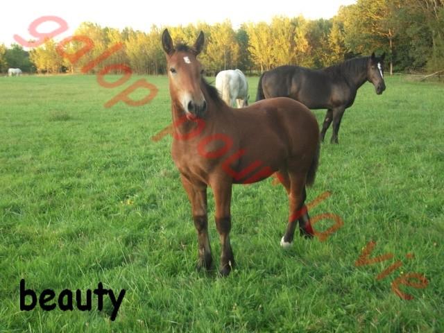 BEAUTY - OC Trait - adopté en novembre 2011 par Sylvie  Beauty10