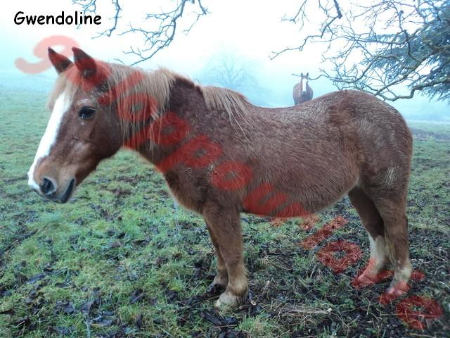 GWENDOLINE - ONC Typée Haflinger née en 1978 - accueillie dans un refuge en janvier 2012 Dsc01210