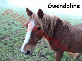 GWENDOLINE - ONC Typée Haflinger née en 1978 - accueillie dans un refuge en janvier 2012 Dsc01211