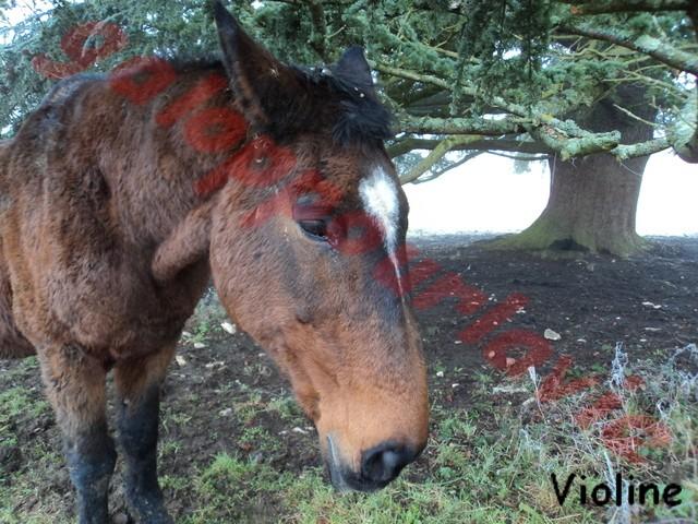 VIOLINE - SF née en 1987 - accueillie dans un refuge en janvier 2012 Dsc01213