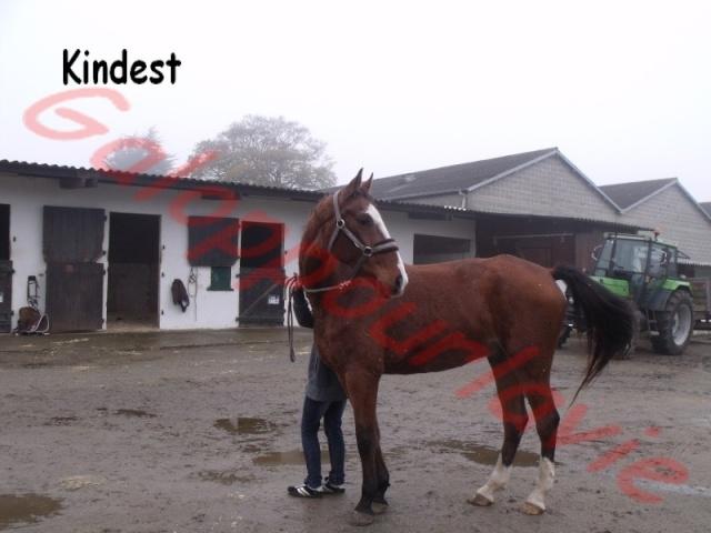 KINDEST - SF né en 1998 - adopté en juillet 2012 Dscf5011