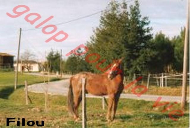 FLI FLOU dit FILOU - AA né en 1984 - accueilli en mars 2012 chez Pech Petit Filou10