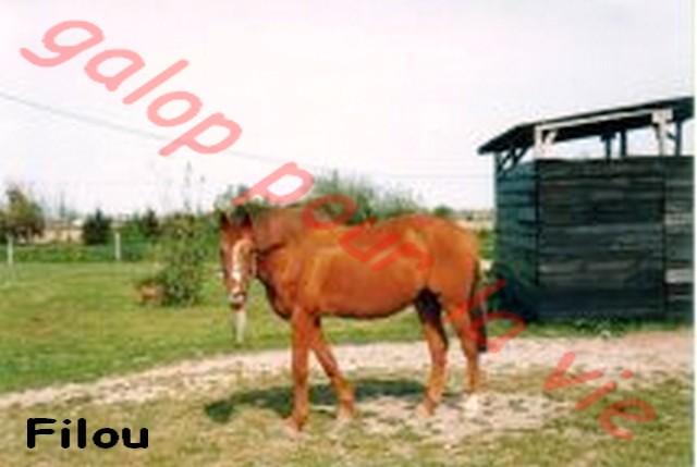 FLI FLOU dit FILOU - AA né en 1984 - accueilli en mars 2012 chez Pech Petit Filou_10