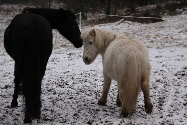 PRISCA - ONC poney typée Shetland née en 1990 - adoptée en septembre 2010 par Delphine - Page 3 Img_0110