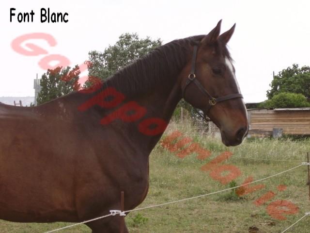 FONT BLANC - SF né en 1993 - Annonce désactivée à la demande de sa propriétaire Imgp0510