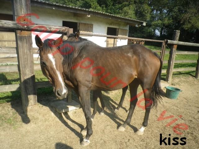 KISS - PS née en 1998 - Annonce désactivée en l'absence de réponse du propriétaire Kiss10
