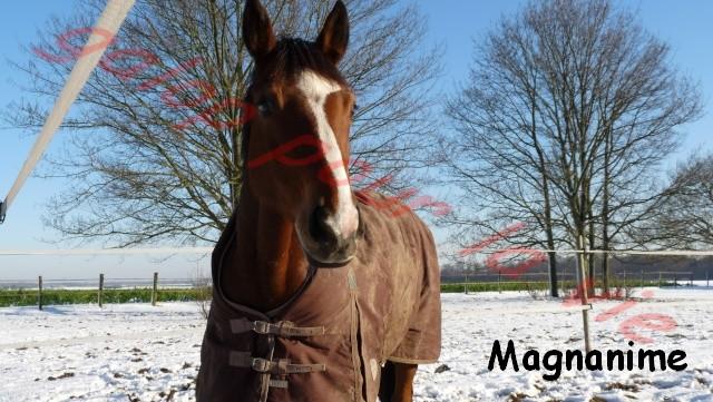 MAGNANIME - SF né en 2000 - Placé hors association Magna10