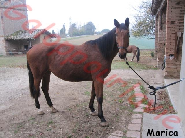 MARICA - SF née en 2001 - Adoptée en avril 2012 par Rafale Ok210