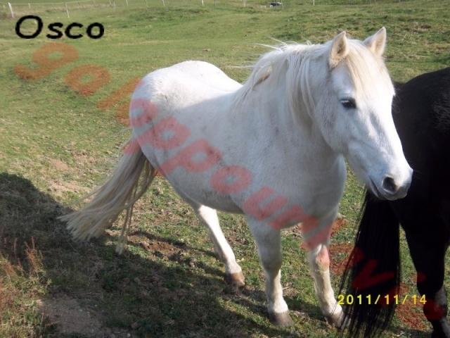 OSCO - Camargue PP né en 2002 - Adopté en mars 2012 par Anaïs  Osco10