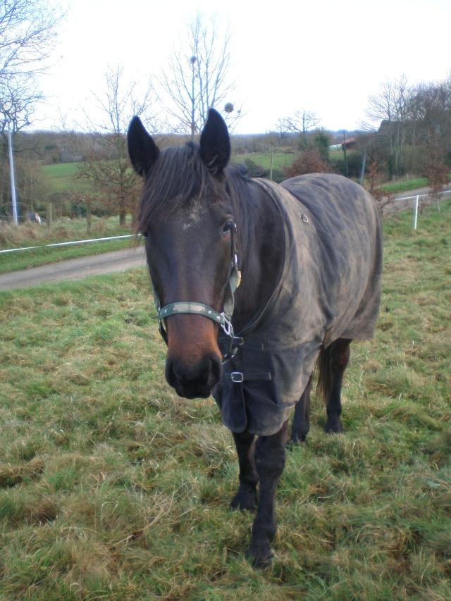 TREMOLO - TF né en 2007 - adopté en décembre 2011 par Bruno P1230110