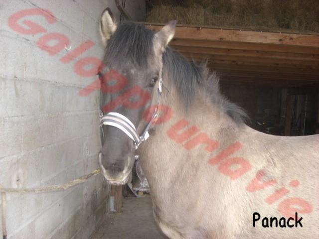 PANACK - Konick Polski entier né en 1999 - resté chez son propriétaire Panack10