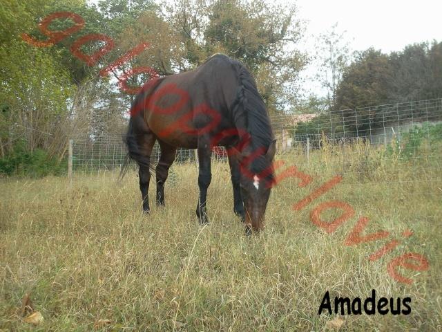 AMADEUS - BWP né en 2000 - adopté en septembre 2011 - Page 2 Photo010