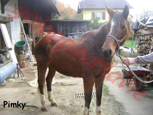 PIMKY - ONC selle née en 2003 - Adopté en décembre 2011 par Poons'7 Pimky10