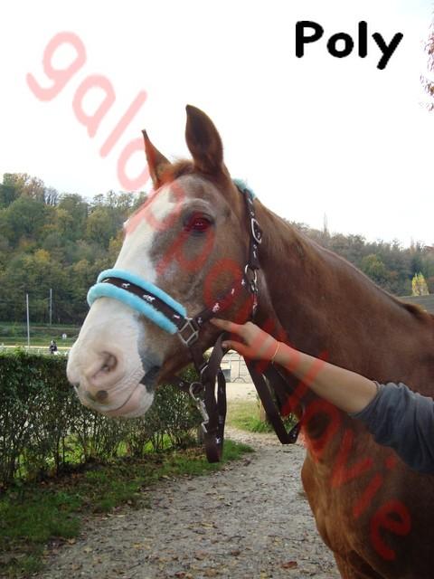 POLY - Belgian Warmblood né en 1992 - adopté en novembre 2011 par Gwenaelle Polyy10
