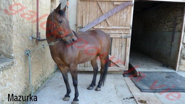 MAZURKA - ONC Poney née en 2000 - adoptée en juillet 2012 par Milia Ponett10