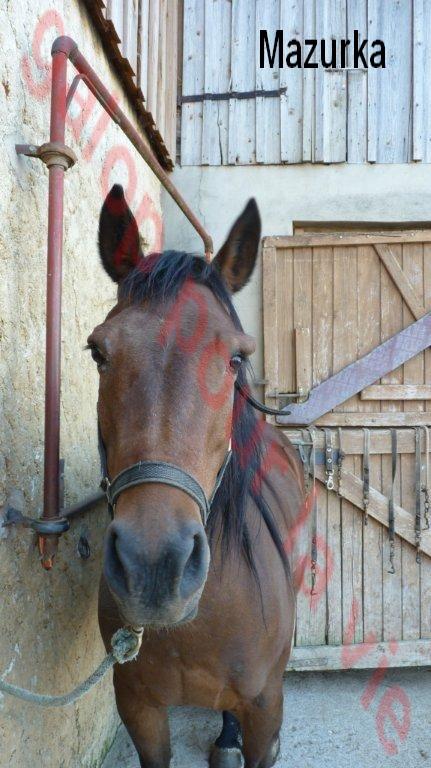 MAZURKA - ONC Poney née en 2000 - adoptée en juillet 2012 par Milia Ponett11