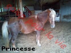 PRINCESSE - ONC typée Landaise née en 1991- adoptée en novembre 2011 Prince14