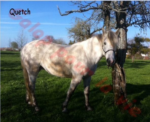 QUETCH - ONC typée Camargue née en 2005 - adoptée en mars 2012  Quesch10
