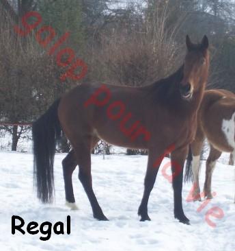 REGAL - TF né en 2005 - gardé par sa propriétaire Rega10