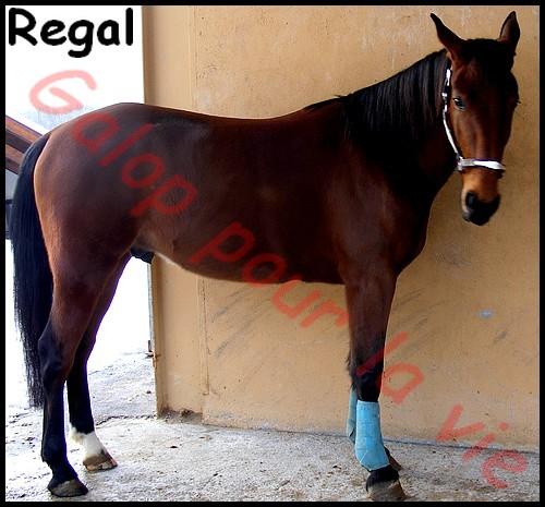 REGAL - TF né en 2005 - gardé par sa propriétaire Regal610
