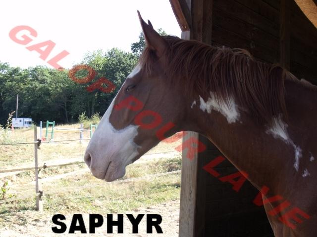 SAPHYR  - ONC né en 2006 - placé hors association Saphir10