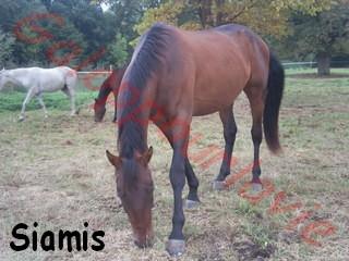 SIAMIS - TF né en 2006 - adopté en mai 2009 par Sandrine Siamis11