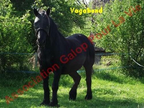 VIF-ARGENT (dit VAGABOND) - Mérens né en 1987 - adopté en juillet 2012 par Gene87 & kaki24800  Vagabo10