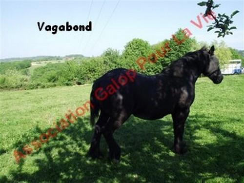 VIF-ARGENT (dit VAGABOND) - Mérens né en 1987 - adopté en juillet 2012 par Gene87 & kaki24800  Vagabo11