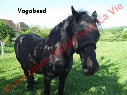 VIF-ARGENT (dit VAGABOND) - Mérens né en 1987 - adopté en juillet 2012 par Gene87 & kaki24800  Vagabo12
