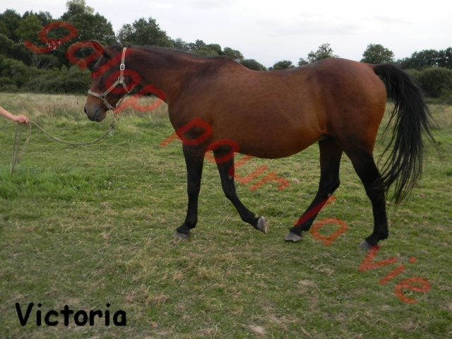 VICTORIA - TF née en 1988 - annonce désactivée en l'absence de réponse du propriétaire Victor14