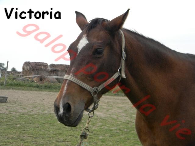 VICTORIA - TF née en 1988 - annonce désactivée en l'absence de réponse du propriétaire Victor15