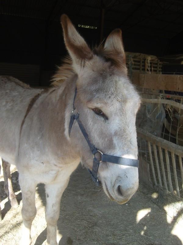 ZEBULON - ONC âne né en 2008 - adopté en octobre 2010 par Anita - Page 5 Zebu10