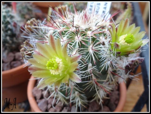 """Retour d'expo a Commentry """"couleur cactus"""" Dsc09513"""
