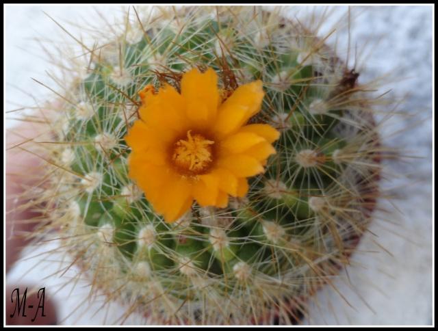 """Retour d'expo a Commentry """"couleur cactus"""" Dsc09514"""